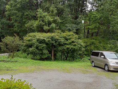 雨が降っています