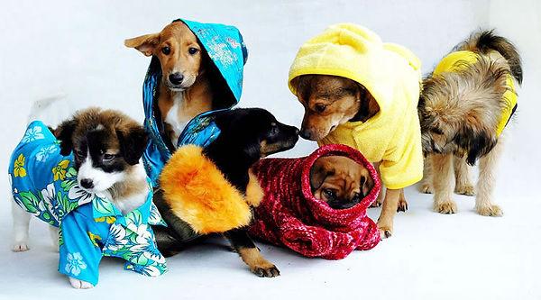hunde kleider puppy bali cryoow