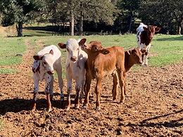 Texas Longhorns.JPG