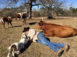 Registered Texas Longhorn Cattle