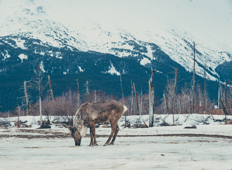 What I Explored in Alaska!