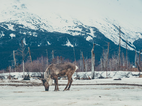What I Explored in Alaska!