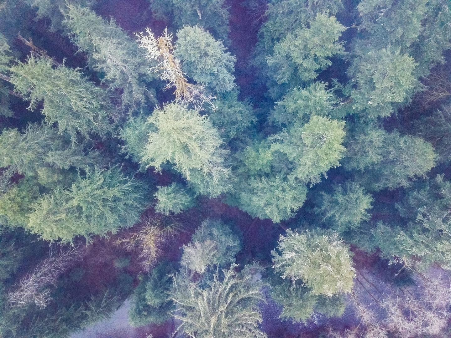Oregon Forest Drone 2019 Road trip For P