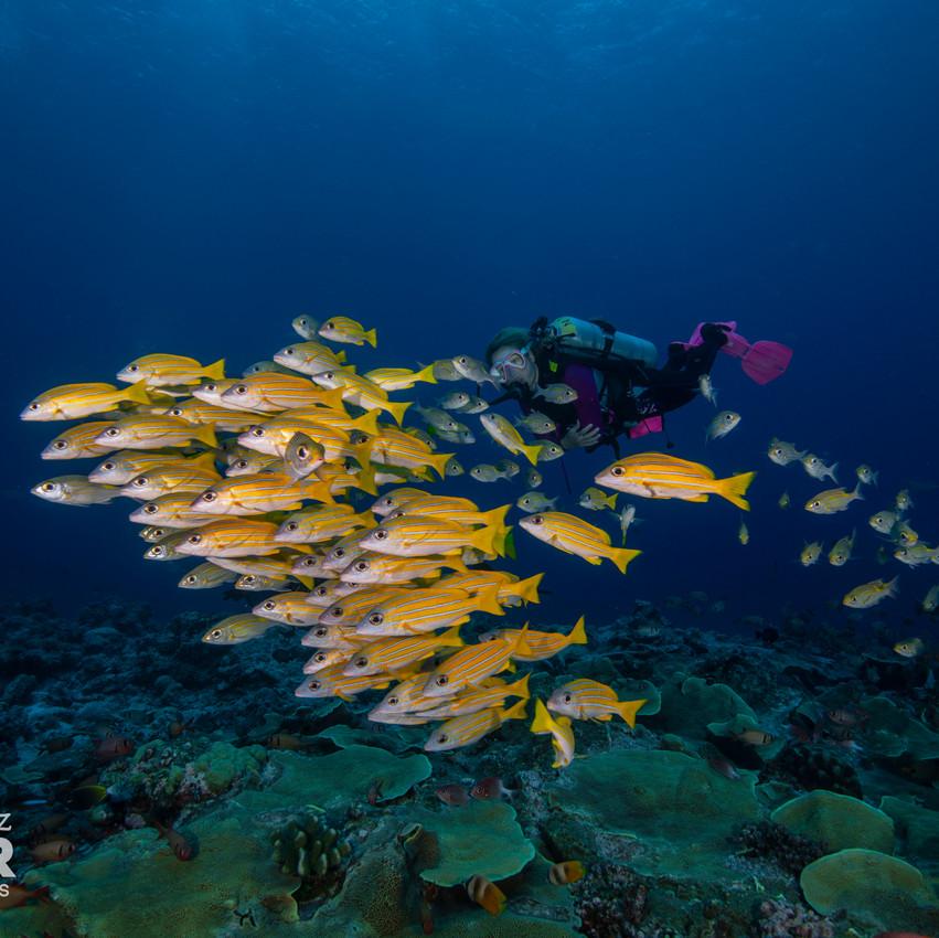 Palau 2019-04 Simon Lorenz-5522