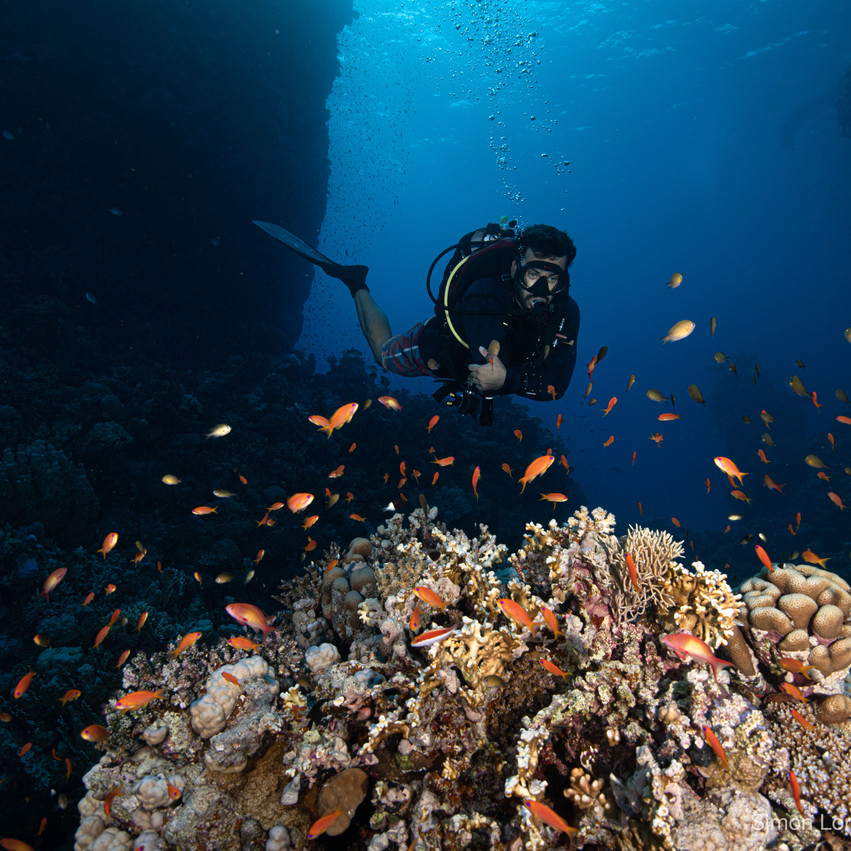Red Sea 2019 Simon Lorenz-1254