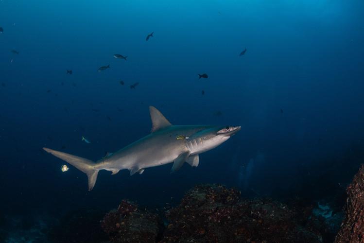 Galapagos 2018-09 Simon Lorenz-1244.jpg
