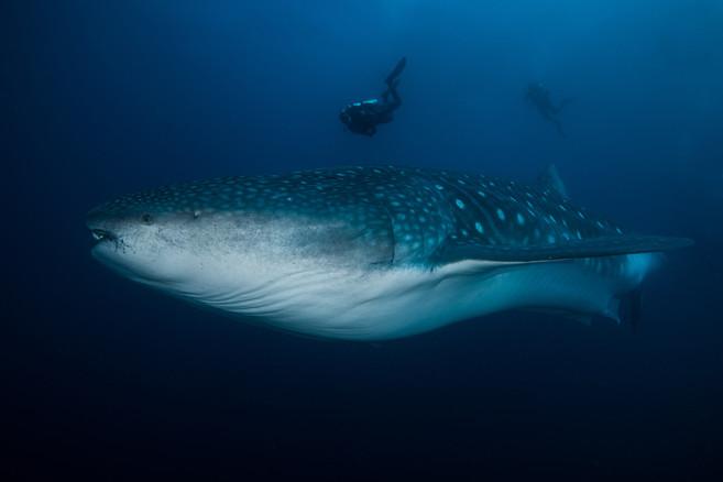 Galapagos 2018-09 Simon Lorenz-2392.jpg