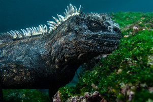 Galapagos 2018-09 Simon Lorenz-2707.jpg