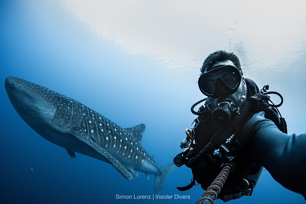 Selfie with a friendly Whaleshark