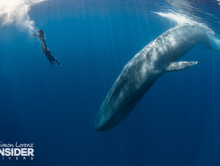 Sri Lanka - Wrecks, Reefs and Whales