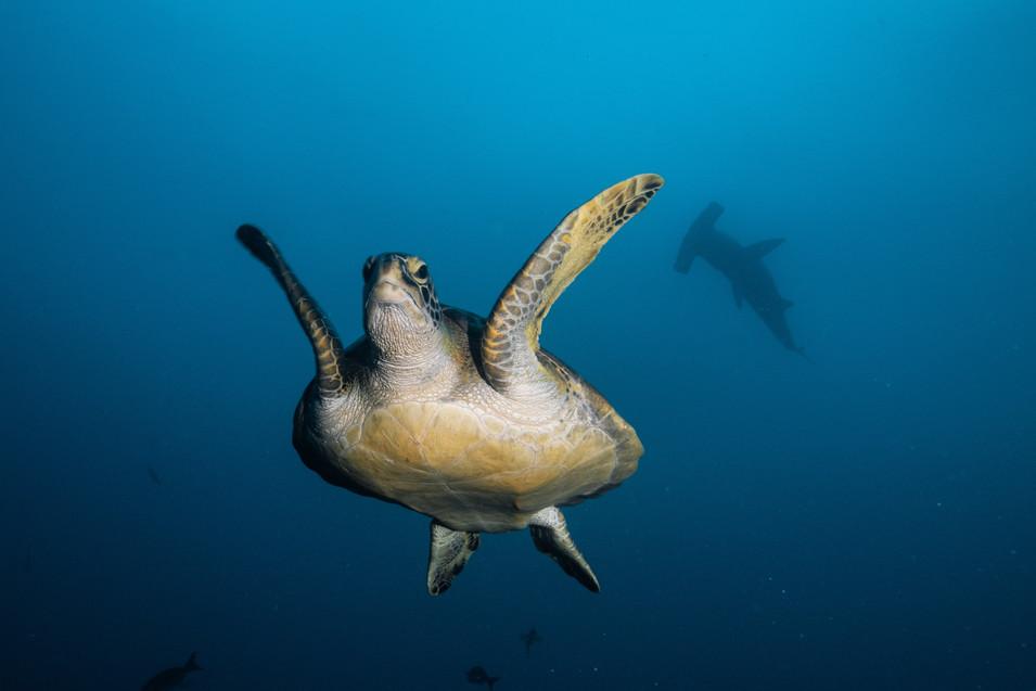 Galapagos 2018-09 Simon Lorenz-1438.jpg