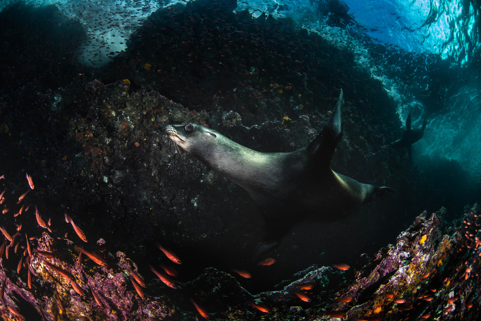 Galapagos 2018-09 Simon Lorenz-2999.jpg