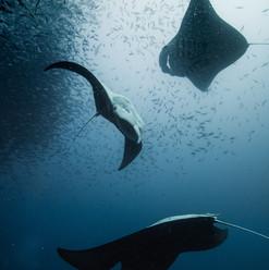 Palau 2016-12 Simon Lorenz -4832.jpg