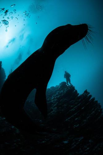 Galapagos 2018-09 Simon Lorenz-2812.jpg