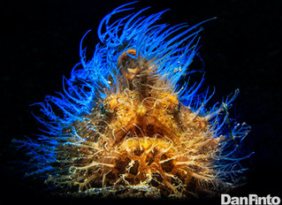 Daniel Pinto - Insider Divers Photographer of the Month