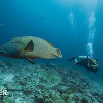 Palau 2017-04 Simon Lorenz-8400.jpg