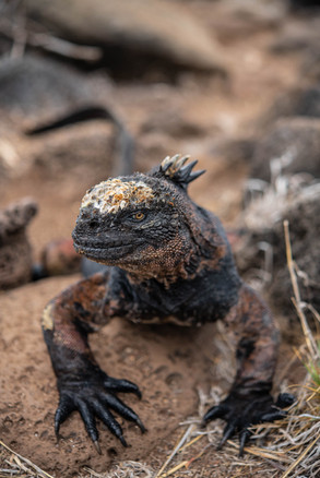 Galapagos 2018-09 Simon Lorenz-1014.jpg