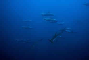 Galapagos 2018-09 Simon Lorenz-2371.jpg