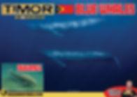 2020-10 Timor v2.jpg
