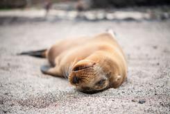 Galapagos 2018-09 Simon Lorenz-0849.jpg