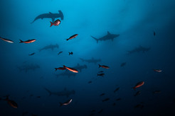 Galapagos 2018-09 Simon Lorenz-1493.jpg