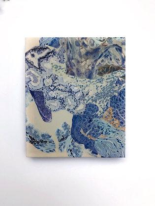 Observed Tissue XXV