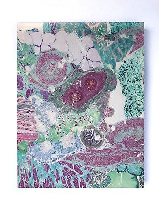Observed Tissue VII
