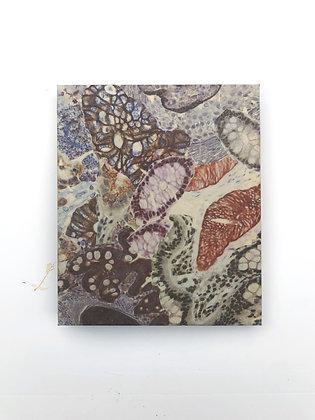 Observed Tissue XIV