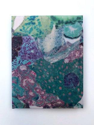 Observed Tissue XI