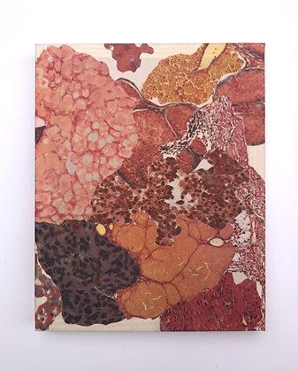 Observed Tissue XVIII