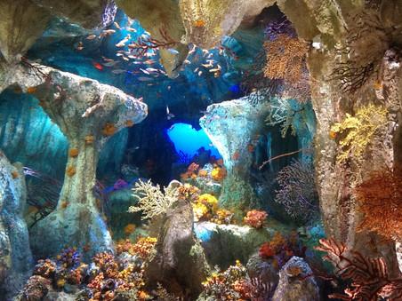 aquarium2.jpg