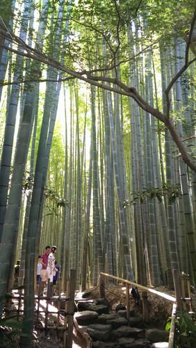 bamboogarden7-20-2015-3.jpg