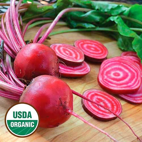 Chioggia Beet (seed packets)