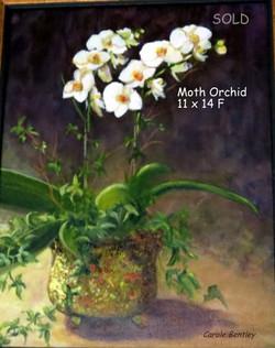 Moth Orchard