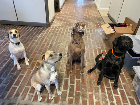 Engineering Dogs in the Office