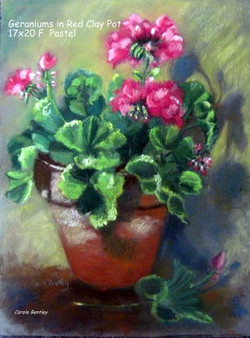 Geraniums in Red Clay Pot