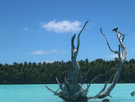 Luxury Resort Showdown in French Polynesia