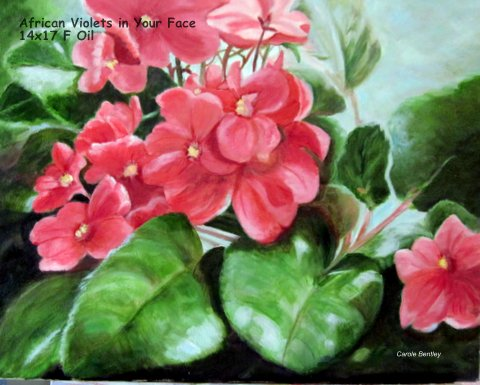 African Violets in Your Face