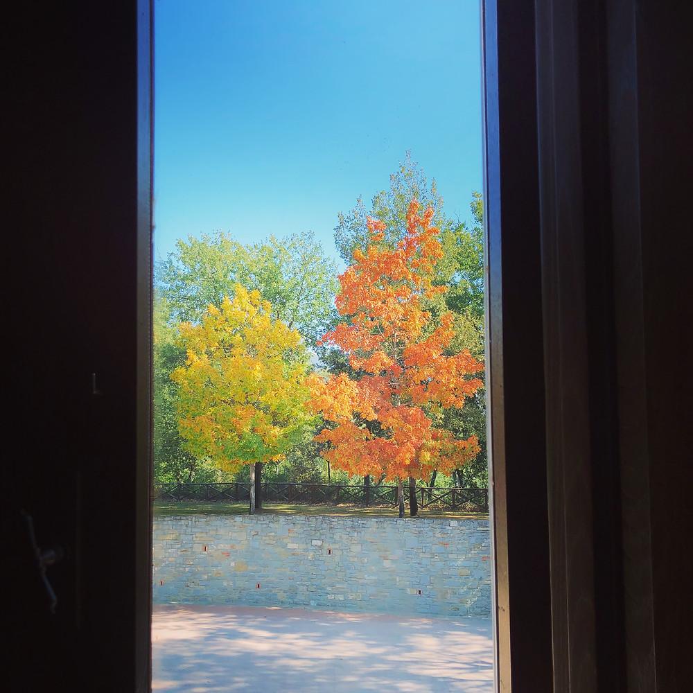 Fall Foliage at Il Borro