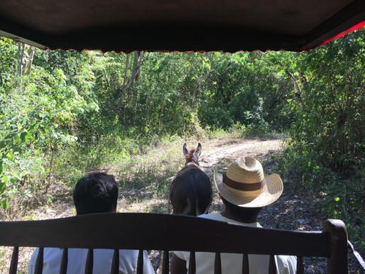 Adventure in the Yucatan