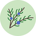 Juniper_brand_green circle.png