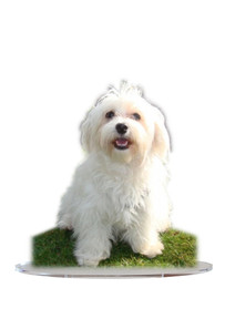 photo sculture chien.jpg