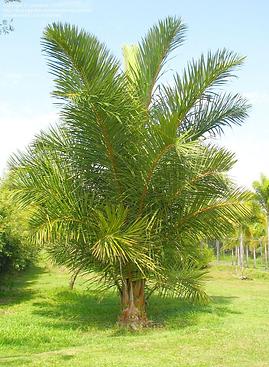 RAFFIA TREE.png