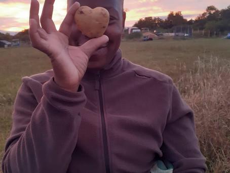 La pomme de terre de l'amour