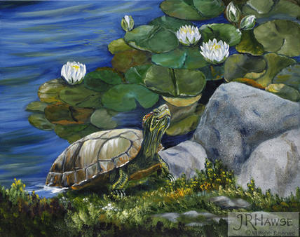 Turtle in the Garden