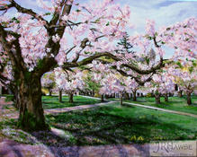 Blossoms on the Quad