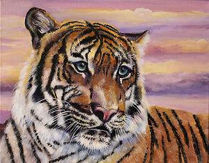 JR Hawse_Sunset Tiger_395.jpg