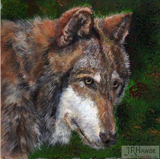 Wolf - One Glance