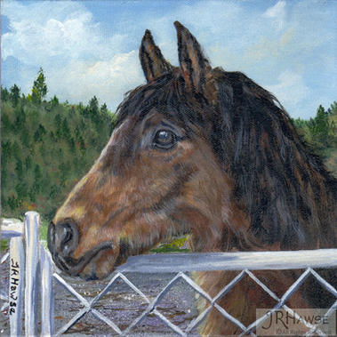 Mt Si Pony