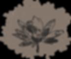 Fleur esquisse.png